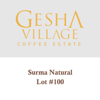 Gesha Village Surma Lot#100 (Natural) – Geisha