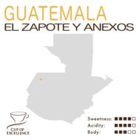 Guatemala COE #16 – El Zapote Y Anexos (Washed)