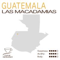 Guatemala COE #1 – Las Macadamias (Natural)