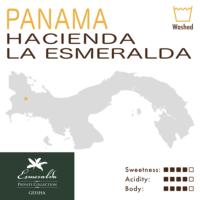 Panama – Hacienda La Esmeralda – Private Collection – Green Label (Washed) – Geisha
